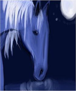 horse_300